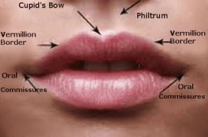 lip-cancers